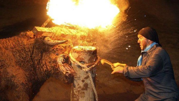 Der Stier wird an einen Pfahl gezerrt, festgebunden und über seinen Hörnern Pech-Fackeln positioniert. (Foto)