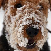 Winter-Alarm! Wettervorhersage kündigt Schnee und Schmuddelwetter an (Foto)