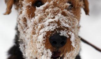Pünktlich zum Novemberausklang wird in Deutschland Schnee erwartet. (Foto)