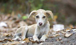 Ein Mann übergoss seinen Hund bei -32 Grad immer wieder mit Wasser. (Symbolbild) (Foto)