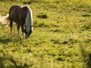 In derOberhavel geht ein Pferdehasser um. (Foto)