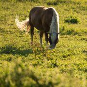 Mit Stahlstange! Tierquäler sticht Fohlen Auge aus und tötet Wallach (Foto)