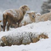 HIER wird Schnee erwartet (Foto)