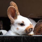 Dramatische Rettung! Mann bewahrt Kaninchen vor dem Flammentod (Foto)