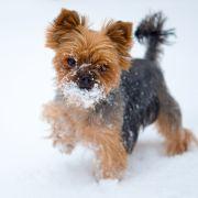 Sadistischer Tierquäler steckt Hund ins Eisfach (Foto)