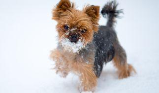 Der Tierquäler steckte einen kleinen Hund ins Eisfach. (Foto)