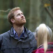 Jetzt setzt Harry den Kampf seiner Mutter Lady Di fort (Foto)