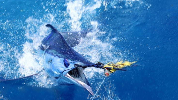 Australische Angler haben mit ihrem Fang einen Rekord aufgestellt. (Symbolbild) (Foto)