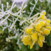 Frost statt Hochwasser! Die Wettervorhersage aktuell (Foto)