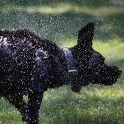 Schlagsahne als Leckerli! Polizei erwischt Frau beim Hunde-Sex (Foto)