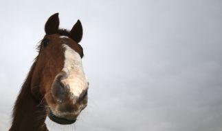 Ein Ehepaar überraschte einen 18-Jährigen beim Pferdesex. (Foto)