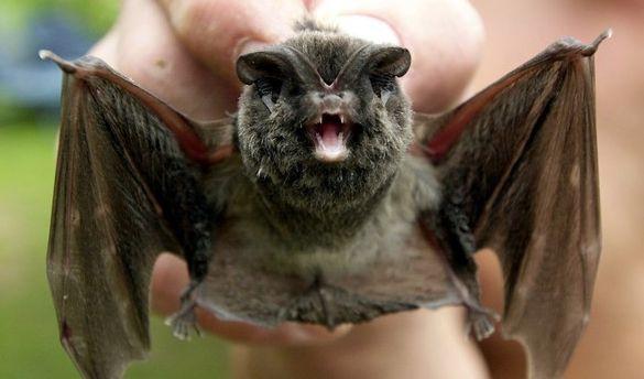 Junge (6) berührt Fledermaus und stirbt qualvoll (Foto)