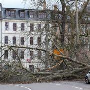 """8 Tote! Sturm """"Friederike"""" heftiger als """"Kyrill"""" (Foto)"""