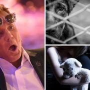 Dieter Bohlen: Tödliche Beichte // Abartige Fälle von Tierquälerei // Flüchtling missbraucht 4-Jährige (Foto)