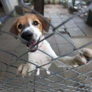 Russland plant Massenschlachtung von Straßenhunden (Foto)
