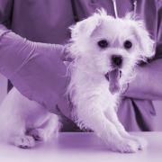 Hund eingefärbt - Tierpfleger kämpfen Monate um sein Leben (Foto)