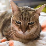Katzen über Jahre zu Paketen zusammengeschnürt (Foto)