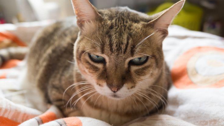 Groß Eins Zwei Von Katze 5 Draht Zeitgenössisch - Die Besten ...