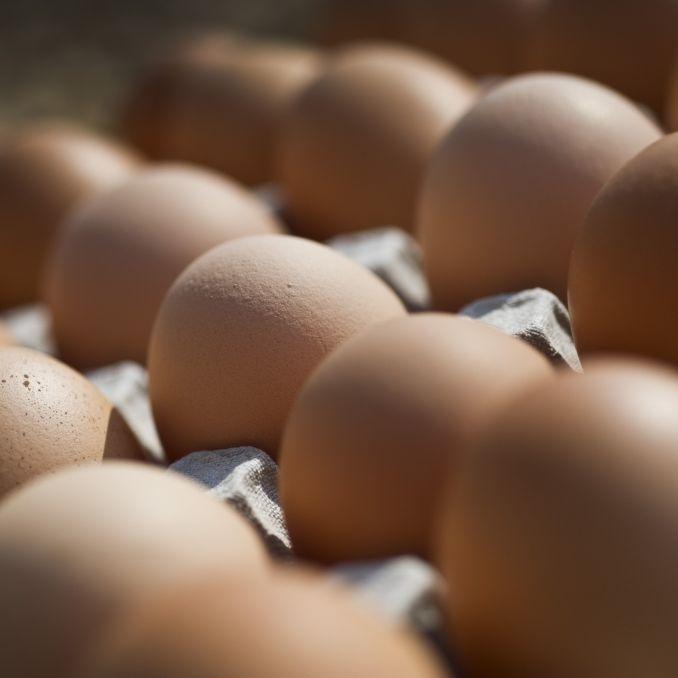Mit Keimen verseucht! Edeka und Rewe rufen DIESE Eier zurück (Foto)