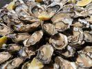 Das Unternehmen Cultimer ruft Austern zurück. (Foto)