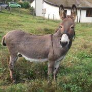 Perverser vergewaltigt Esel bis zur Bewusstlosigkeit (Foto)