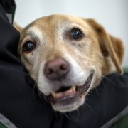 Hund bei Minusgraden im Auto zurückgelassen (Foto)