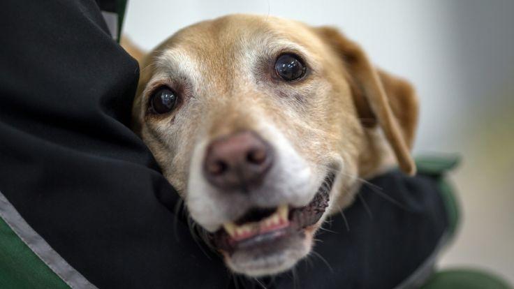 Hund fast in Auto erfroren: Beamter schlägt Scheibe ein