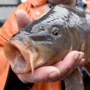 Penis-Infektion! Mann vergnügt sich mit Fischgedärmen (Foto)