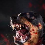 Mädchen (12) von Hunden in Stücke zerfleischt und gefressen (Foto)