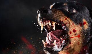 Streunende Hunde haben ein Mädchen (12) in der Ukraine tot gebissen. (Symbolbild) (Foto)