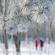 Rekordfrost mit -22 Grad! Die Eiseskälte kommt erst noch (Foto)
