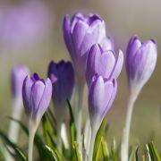 Sonniger Frühling? Das sagt der Hundertjährige Kalender (Foto)