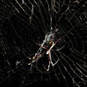 Wie im Horrorfilm! Tausende Spinnen ausgequetscht (Foto)