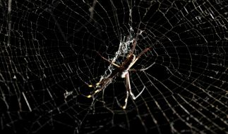 Achtbeinige Krabbeltiere sind für Arachnophobiker die Hölle auf Erden. (Foto)