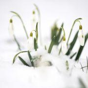Ende der Kälte-Welle? Meteorologen sagen Plusgrade voraus (Foto)