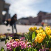 In den kommenden Tagen können sich in Deutschland bei Temperaturen von bis zu 18 Grad Frühlingsgefühle breit machen.