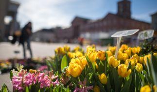 In den kommenden Tagen können sich in Deutschland bei Temperaturen von bis zu 20 Grad Frühlingsgefühle breit machen. (Foto)