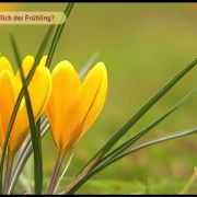 Wann wird es endlich Frühling?