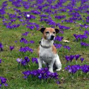 Tschüss, Frühling! Zum Wochenstart wird's durchwachsen (Foto)