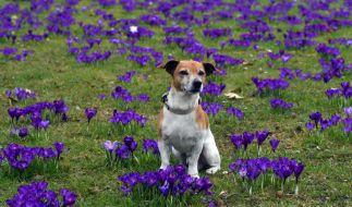 Der Frühling lässt in Deutschland noch auf sich warten - zum Start in die neue Woche zeigt sich das Wetter durchwachsen. (Foto)