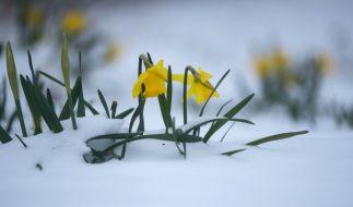 Der Frühling versteckt sich noch. (Foto)