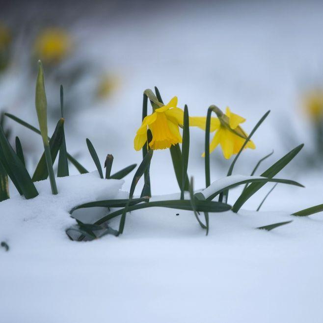 Vorsicht, Sonnenbrand! Spätwinter bringt Dauerfrost (Foto)