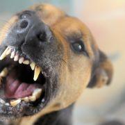 Noah (4) von Familienhund zu Tode geschüttelt (Foto)