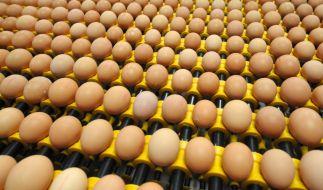 Nicht immer sind Bio-Eier tatsächlich Bio. (Foto)