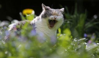 Mit welchem Katzen-Trockenfutter werden Stubentiger am besten versorgt? (Foto)