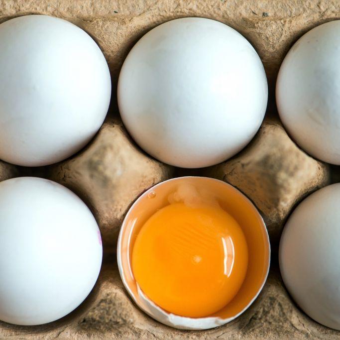 Norma, Rewe, Netto, Penny und Edeka rufen Eier zurück (Foto)