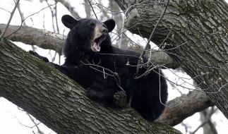 Ein Selfie mit einem Bär endet für einen Inder tödlich. (Symbolbild) (Foto)
