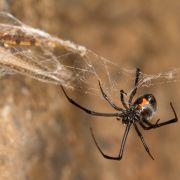 Nach Spinnenbiss! Mann (46) will Bein mit Kettensäge abtrennen (Foto)