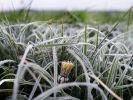 Sorgen die Eisheiligen in diesem Jahr für Frost? (Foto)