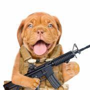 Pfoten hoch! Hund schießt seinem Herrchen ins Bein (Foto)